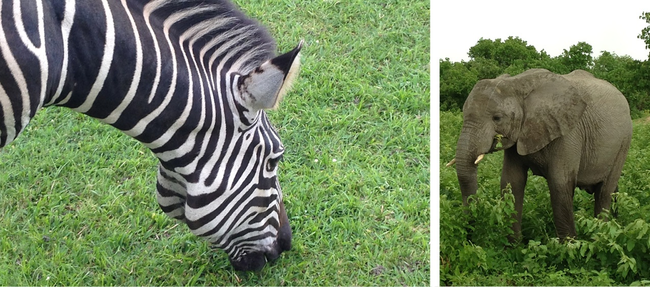 African Animals Up Close